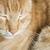 bebek · kedi · yavruları · uyku · üç · çok · güzel - stok fotoğraf © deyangeorgiev