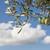 olive branches on foreground blue sky stock photo © deyangeorgiev