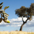três · outono · carvalho · folhas · macro · terreno - foto stock © deyangeorgiev