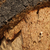 cortiça · textura · marrom · placa · de · cortiça · tiro · estúdio - foto stock © deyangeorgiev