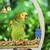 groene · papegaai · natuur · achtergrond · vogel · portret - stockfoto © deyangeorgiev