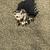 tropikal · kabukları · denizyıldızı · plaj · egzotik · kumlu - stok fotoğraf © deyangeorgiev