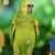 papegaai · vogels · permanente · rij · familie · menigte - stockfoto © deyangeorgiev