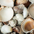 scattered seashells background stock photo © deyangeorgiev