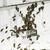 arılar · kovan · beyaz · aile · çalışmak - stok fotoğraf © deyangeorgiev