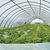 greenhouse stock photo © deyangeorgiev