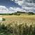 tahıl · çiftlik · Toskana · İtalya · manzara - stok fotoğraf © deyangeorgiev