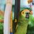 papagáj · madarak · áll · csetepaté · család · tömeg - stock fotó © deyangeorgiev