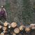 fa · háttér · száraz · aprított · tűzifa · egymásra · pakolva - stock fotó © deyangeorgiev