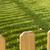ogrodzenia · zielone · roślin · wiosną · trawy - zdjęcia stock © deyangeorgiev