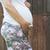 pregnant women in front of old wooden wall stock photo © deyangeorgiev