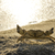 zee · krab · strand · oceaan · zand · leven - stockfoto © deyangeorgiev