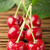vers · sappig · organisch · tak · groene · bladeren · geïsoleerd - stockfoto © deyangeorgiev
