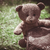 teddy bear on the grass stock photo © deyangeorgiev