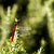 butterfly and green background stock photo © deyangeorgiev