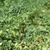 plantação · fundo · verde · pintinho · estoque · pote - foto stock © deyangeorgiev