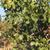pisztácia · étel · természet · gyümölcs · egészség · ipar - stock fotó © deyangeorgiev