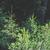 зеленый · холме · деревья · соснового · мнение · небольшой - Сток-фото © deyangeorgiev