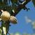 amande · noix · arbre · ferme · agriculture · alimentaire - photo stock © deyangeorgiev