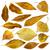 набор · желтый · листьев · дерево · древесины - Сток-фото © deyangeorgiev