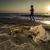sunrise on the beach shells stock photo © deyangeorgiev