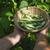 文字列 · 豆 · 食品 · 庭園 · 緑 · ディナー - ストックフォト © deyangeorgiev
