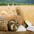 gouden · tarwe · granen · stilleven · hout · natuur - stockfoto © deyangeorgiev