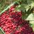 свежие · вкусный · фрукты · деревянный · стол - Сток-фото © deyangeorgiev