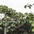 kiwi · usine · plantation · cultures · jour · lumière - photo stock © deyangeorgiev