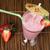 Strawberries milk shake stock photo © deyangeorgiev