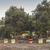 kolorowy · rząd · charakter · trawy · drewna · ogród - zdjęcia stock © deyangeorgiev