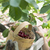 cute · fille · cerises · jardin · arbre - photo stock © deyangeorgiev