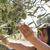 aceitunas · cosecha · manos · mediterráneo · guantes - foto stock © deyangeorgiev