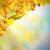 grens · najaar · hemel · exemplaar · ruimte · textuur - stockfoto © deyangeorgiev