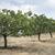 einsamen · Baum · trocken · Insel · Wasser - stock foto © deyangeorgiev