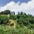 Toskana · manzara · gündoğumu · çiftlik · ev - stok fotoğraf © deyangeorgiev