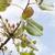 pistache · arbre · branche · fruits - photo stock © deyangeorgiev