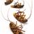 ölü · hamamböceği · beyaz · yalıtılmış · arka · plan - stok fotoğraf © dezign56