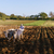 man farmer at work ploughing the soil with ox stock photo © diego_cervo