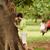grupo · crianças · corrida · parque · criança · meninas - foto stock © diego_cervo