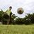çocuklar · oynama · futbol · park · bakıyor - stok fotoğraf © diego_cervo