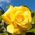 Geel · steeg · bloem · textuur · achtergrond - stockfoto © digoarpi