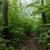 voetganger · pad · bos · natuur · landschap - stockfoto © digoarpi