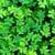 clover stock photo © digoarpi