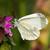 lagartas · repolho · borboleta · macro · natureza · planta - foto stock © digoarpi