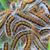 orugas · nido · muchos · pequeño · oruga · recién - foto stock © digoarpi