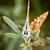 azul · borboleta · areia · retrato · estudar · belo - foto stock © digoarpi