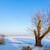 inverno · paisagem · congelada · lago · pôr · do · sol · céu - foto stock © digoarpi