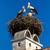 storks stock photo © digoarpi