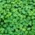 verde · fresco · trevo · campo · dia · férias - foto stock © digoarpi